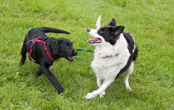 تفسير حلم هجوم الكلاب والكلاب البنيه،الكلاب السوداء في المنام، وعضة الكلب