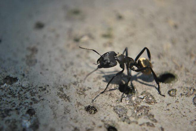 رؤية النمل الاسود في المنام